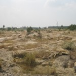 World Fossil Society found a new Mio-Pliocene fossil bed along the eastern coast of indian subcontinent (Stock photo-3)