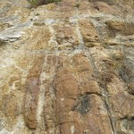 World Fossil Society found a new Mio-Pliocene fossil bed along the eastern coast of indian subcontinent (Stock photo-2)