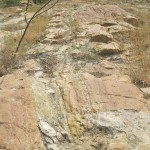 World Fossil Society found a new Mio-Pliocene fossil bed along the eastern coast of indian subcontinent (Stock photo-1)