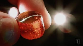 Sir David Attenborough narrates and appears in a video about the digital curation of a 20-million-year-old amber collection at the Illinois Natural History Survey at Illinois. (See link to video in paragraph 9.) - IMAGE and VIDEO by Kaitlin and Kevin Southworth