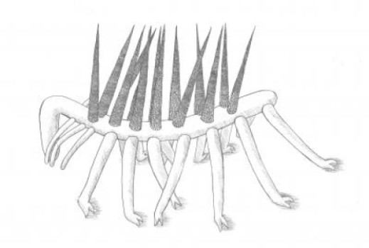 This is a reconstruction of the Burgess Shale animal Hallucigenia sparsa. Credit: Elyssa Rider