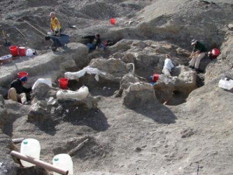A US-Argentinian team led by Drexel University's Kenneth Lacovara, PhD, excavated the skeleton of Dreadnoughtus schrani from southern Patagonia over four field seasons from 2005 through 2009. The completeness and articulated nature of the two skeletons they found are evidence that these individuals were buried in sediments rapidly before their bodies fully decomposed. Credit: Kenneth Lacovara