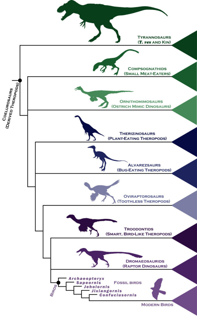 Researchers examined the evolutionary links between ancient birds and their closest dinosaur relatives, by analyzing the anatomical make-up of more than 850 body features in 150 extinct species, and used statistical techniques to analyze their findings and assemble a detailed family tree. Credit: Steve Brusatte