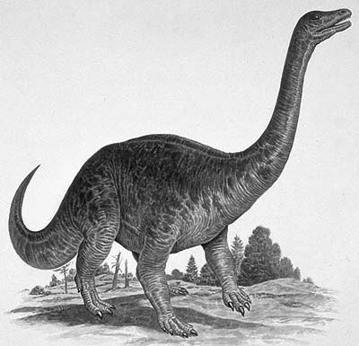 Riojasaurus (Rioja lizard)