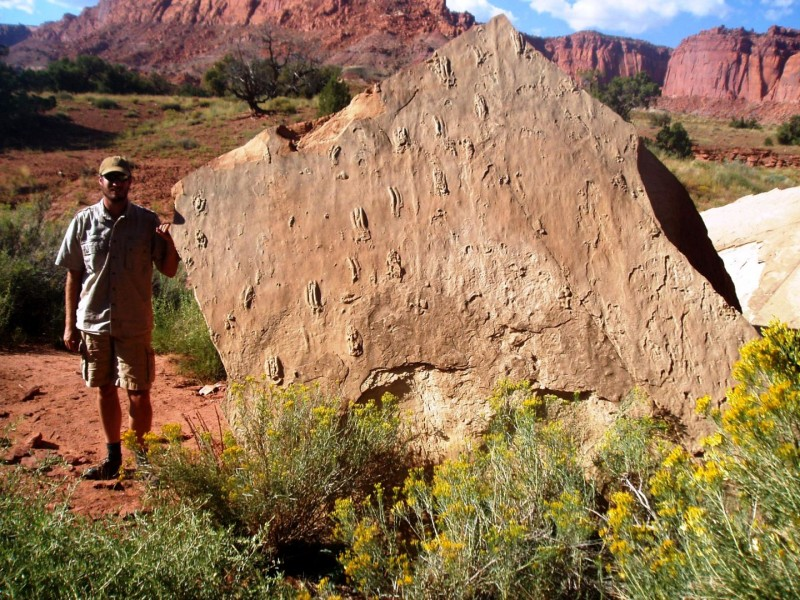 This image shows a swim traceway from Capitol Reef National Park. Credit: Tracy J. Thomson and Mary L. Droser, Geology, 5 Feb. 2015.