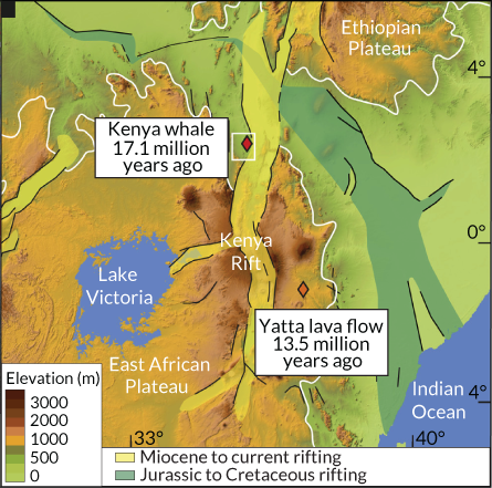 This map shows the present elevation of the East African Plateau where the whale fossil was found. The region has undergone many geological changes, including massive uplift, an ancient lava flow, as well as rifting during the Jurassic and Cretaceous periods (200 million to 65.5 million years ago) and from the Miocene period (23 million years ago) to today.