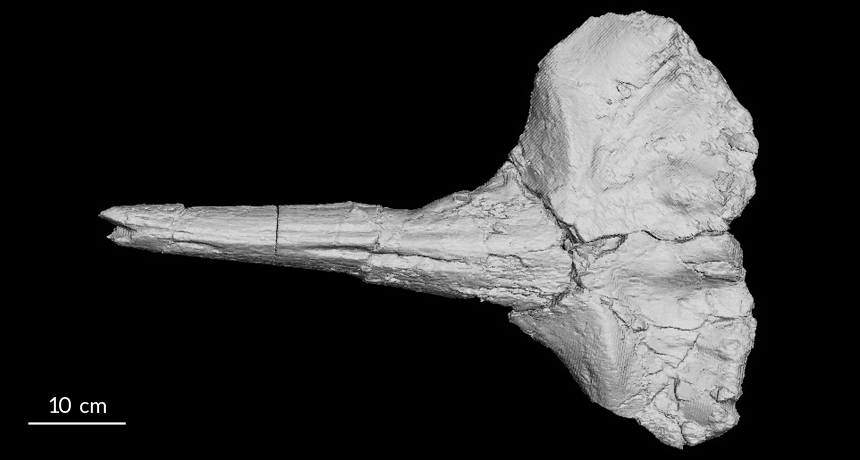 A beaked whale that got stuck in a river 17 million years ago is helping to pinpoint when the East African Plateau began to rise.