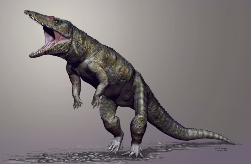This is a life reconstruction of Carnufex carolinensis. Credit: Copyright Jorge Gonzales