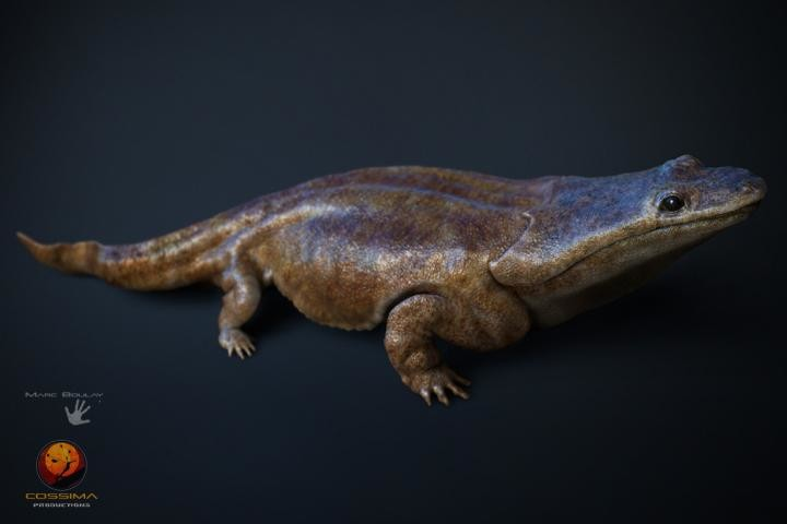 This is a model of Metoposaurus algarvensis. Credit: Marc Boulay, Cossima Productions
