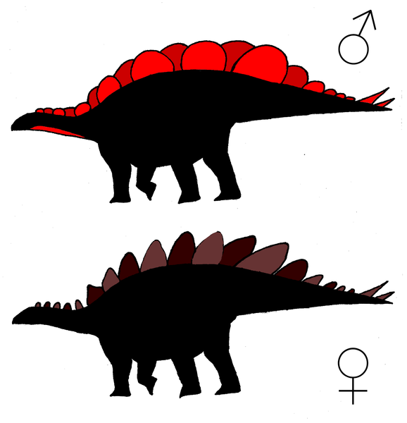 Hypothetical silhouettes of male and female S. mjosi.  The wide morph exhibits more overlap between adjacent plates than does the tall morph, leading to a more continuous display surface. Sexual dimorphism in the size and shape and plates might have also occurred with other sexual differences such as sexual dichromatism.  doi:10.1371/journal.pone.0123503.g004