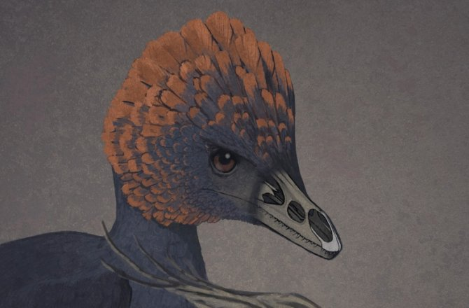 Above is an artist rendition of the non-avian dinosaur Anchiornis (left) and a tinamou, a primitive modern bird (right), with snouts rendered transparent to show the premaxillary and palatine bones.