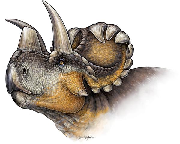 Life reconstruction of Wendiceratops pinhornensis gen. et sp. nov.  Illustration by Danielle Dufault.