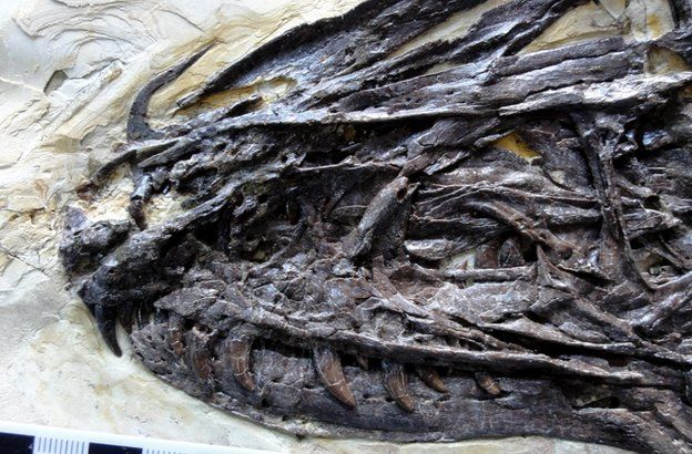 Zhenyuanlong is an ancestor of the infamous velociraptor