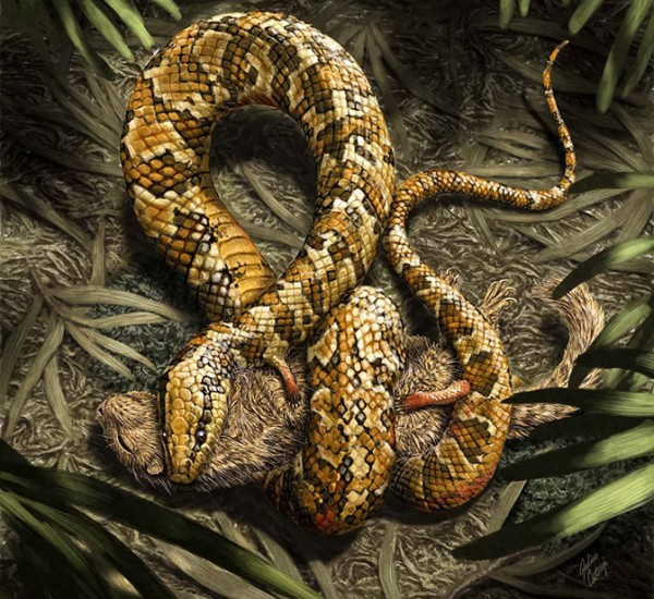 Julius T. Cstonyi  Tetrapodophis (artist's representation) is the first known snake known to have four limbs.