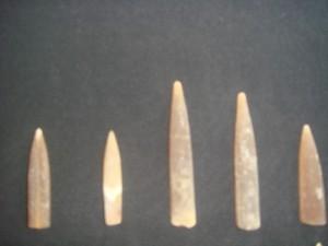 Belemnites Fossils from Ariyalur. Karai Formation . Photo(c) Riffin T sajeev&Russel t sajeev , World Fossil Society (WFS)