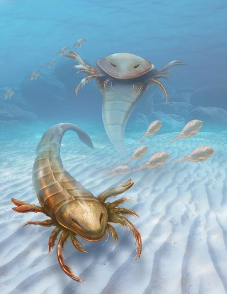 This is an artist's rendering of Pentecopterus. Credit: Patrick Lynch/Yale University