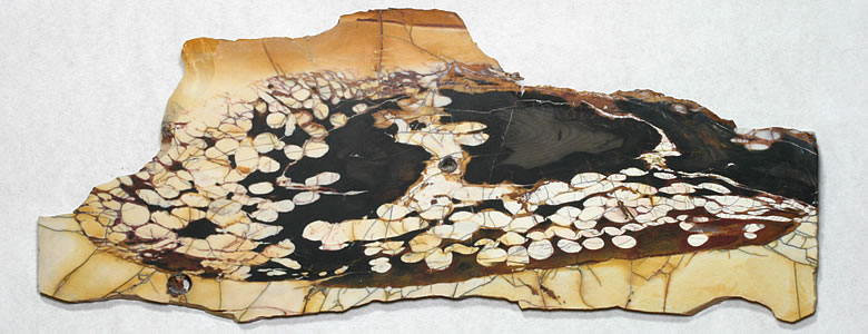 "A nice slab of peanut wood showing lots of ""peanut"" markings that were produced by the infilling of boreholes made by clams. This slab is about 12 inches in width and was cut from peanut wood mined in the Kennedy Ranges of Western Australia."