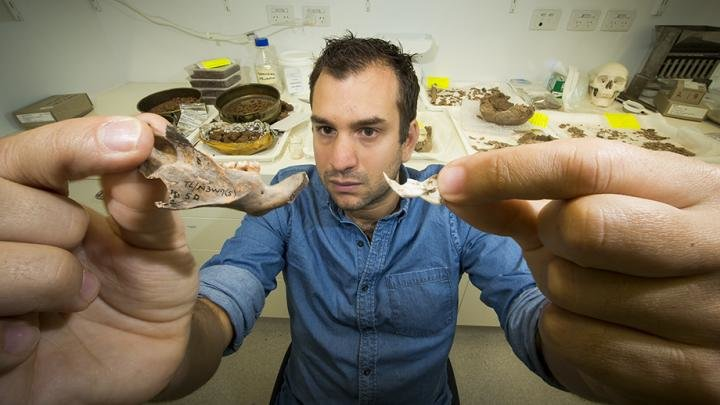 Dr. Julien Louys holds the jaw bone of a giant rat species discovered on East Timor, up against a comparison with the same bone of a modern rat Credit: Stuart Hay, ANU