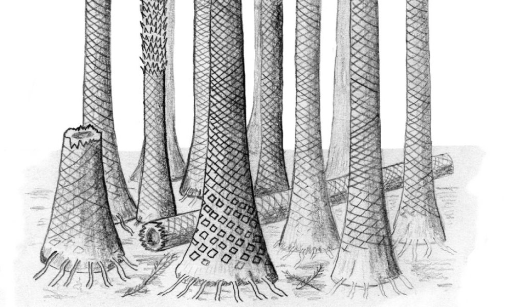 Reconstructed drawing of fossil forest in Svalbard. Credit: Image courtesy of Cardiff University