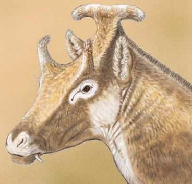 This is a reconstruction of X. amidalae. Credit: Illustration by Israel M. Sánchez