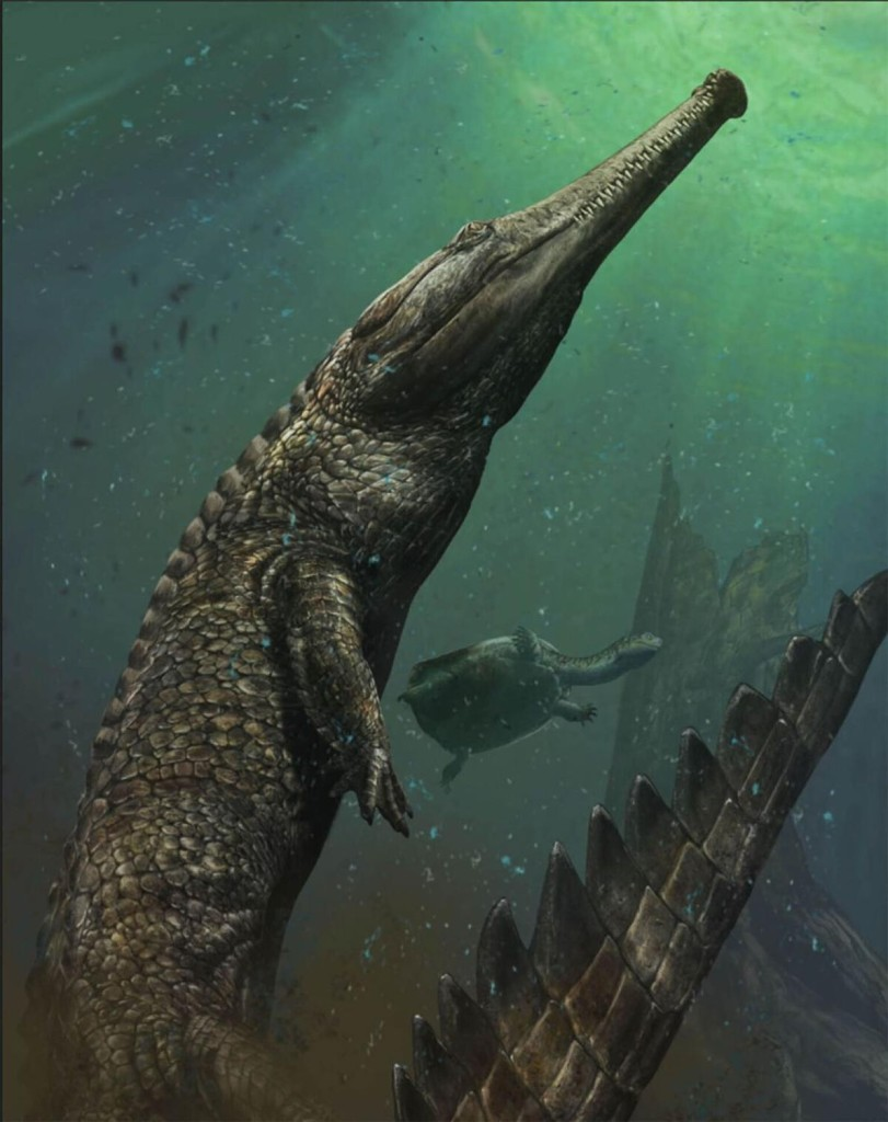 Machimosaurus could have grown to more than 30 feet (almost ten meters) long. ILLUSTRATION BY DAVIDE BONADONNA