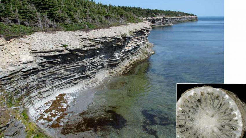 Rocky thermometer. A new sort of isotope analysis has extracted a temperature record from fossils (inset) in these 455-year-old rocks in Quebec, Canada. Seth Finnegan/Caltech