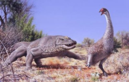 An illustration of a giant flightless bird known as Genyornis newtoni, surprised on her nest by a 1 ton, predatory lizard named Megalania prisca in Australia roughly 50,000 thousand years ago.