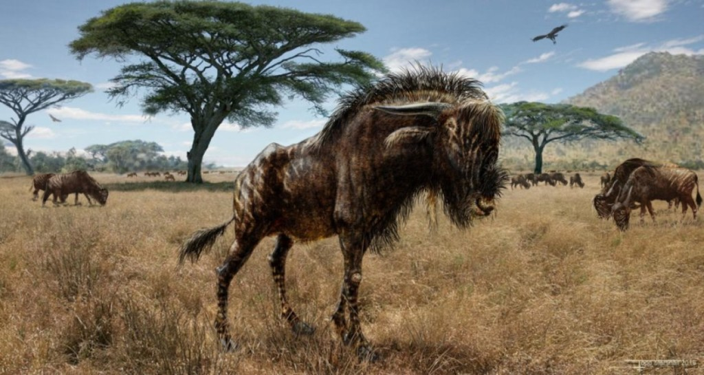 An artist's interpretation of Rusingoryx atopocranion on the Late Pleistocene plains of what is now Rusinga Island, Lake Victoria. Scientists have found many links between Rusingoryx and hadrosaur dinosaurs -- particularly the large, hollow dome that makes a crest on top of the animal's skull. Credit: Todd S. Marshall (http://www.marshalls-art.com)
