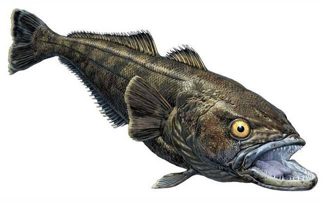 Rhinconichthys purgatoirensis