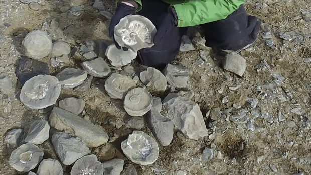 A member of the research team holds one of their finds in Antarctica. UNIVERSITY OF QUEENSLAND/VIMEO