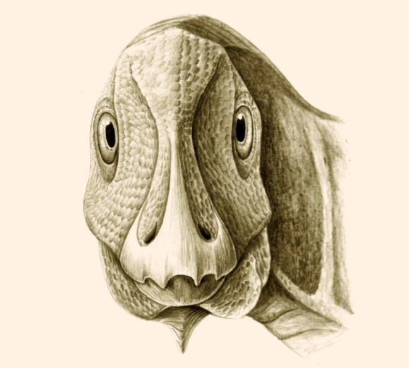 Artistic reconstruction of the pathological individual of the hadrosauroid dinosaur Telmatosaurus transsylvanicus from the uppermost Cretaceous of the Hateg Basin, Romania, in rostral view, showing the probable life appearance of the mandibular deformity caused by ameloblastoma. Image credit: Mihai D. Dumbrava.
