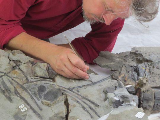 Fossil conservator Nigel Larkin examines the Storr Lochs fossil. (Photo: Uncredited)