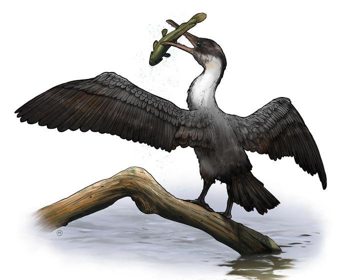 This is an artist's rendering of Tingmiatornis arctica, the new prehistoric bird species discovered by scientists at the University of Rochester. Credit: Artist rendering by Michael Osadciw/University of Rochester