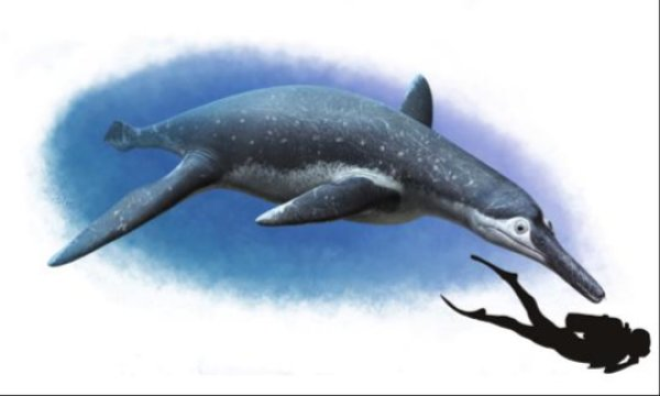 This is an artistic reconstruction of Luskhan itilensis. Credit: Copyright Andrey Atuchin, 2017