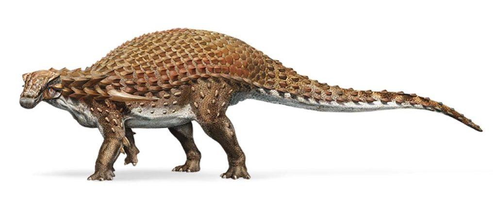 Nodosaur,a type of Ankylosaur
