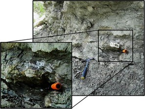 Additional shark vertebrae found in situ in the same locality as OMNH 68860. The surrounding lithology correlates with the indurated limestone bedforms 10.5 m above the base of the measured section (photo courtesy of L. Hall, 2013).