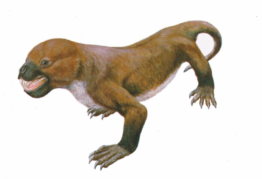 Tritylodontids are the last known family of near-mammalian reptiles, before mammals with features such as advanced hearing evolved. Researchers have uncovered dozens of fossilized teeth in Kuwajima, Japan and identified this as a new species of tritylodontid. This suggests that tritylodontids co-existed with some of the earliest mammal species for millions of years. Credit: Seishi Yamamoto/Hiroshige Matsuoka