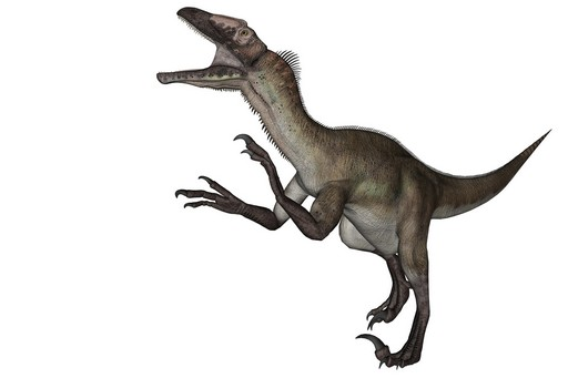 An artist's rendering of a Utahraptor, several specimens of which were found in a massive slab of sandstone in eastern Utah in 2001. Scientists are seeking to raise money to remove the remaining bones from the giant trove of fossils, a slow and painstaking process. Credit Elena Duvernay/Stocktrek Images, via Science Source