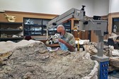 The giant slab of Utahraptor fossils, examined with an articulating microscope that was purchased with funds from the GoFundMe campaign. Credit Scott Madsen