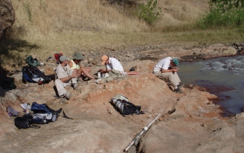 Paleontologists at work in Tanzania on research that led to the find of the new carnivore species. Credit: Nancy Stevens