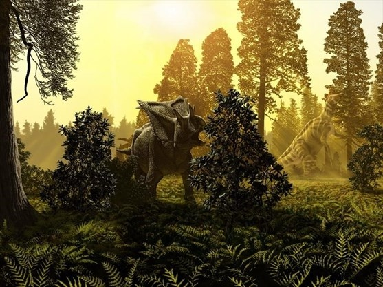 "The chasmosaur is shown in a late Cretaceous forest in this handout illustration. Two years after paleontologist Jordan Mallon of the Canadian Museum of Nature and his team discovered the skull of a chasmosaur while going through a dinosaur bonebed in Alberta, he finally got to see a helicopter lift it into the air.""There's no roads down to the site, it's very remote,"" Mallon said Tuesday from Brooks, Alta., where the chopper was refuelling as it made its way from the spot along the South Saskatchewan River back to Calgary after completing the lift last month. THE CANADIAN PRESS/HO - Julius Csotonyi *MANDATORY CREDIT* - The Canadian Press, 2017"