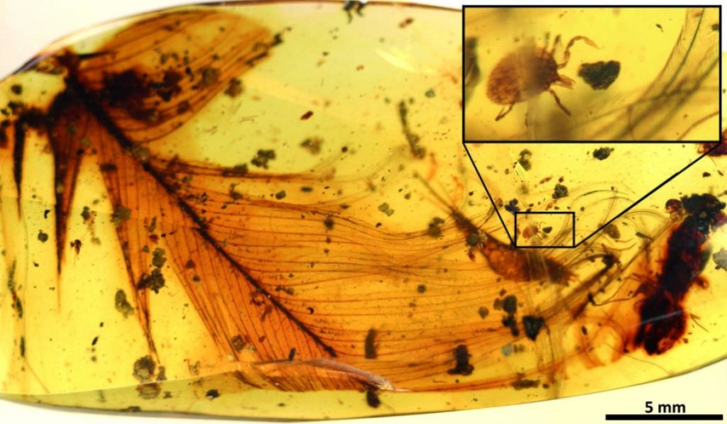 Hard tick grasping a dinosaur feather preserved in 99 million-year-old Burmese amber. Modified from the open access article published in Nature Communications: 'Ticks parasitised feathered dinosaurs as revealed by Cretaceous amber assemblages.' Credit: Paper authors.