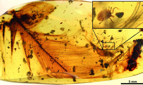 REAL LIFE JURASSIC PARK: Tick with dinosaur blood found in amber fossil