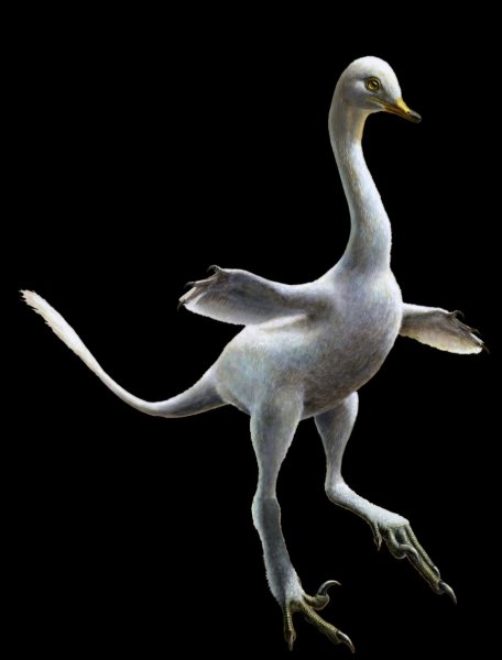 Reconstruction of Halszkaraptor escuilliei. This small dinosaur was a close relative of Velociraptor, but in both body shape and inferred lifestyle it much closely recalls some waterbirds like modern swans. Credit: Lukas Panzarin; and Andrea Cau for scientific supervision