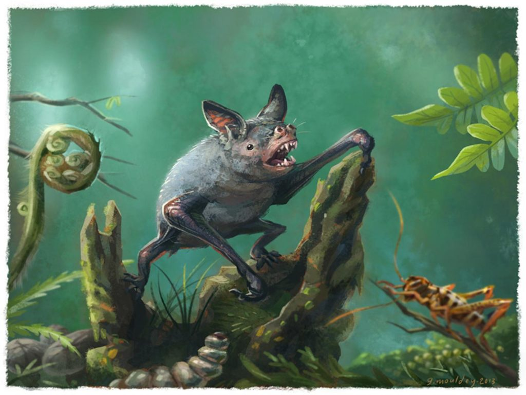 An artist's impression of a New Zealand burrowing bat, Mystacina robusta, that went extinct last century. The new fossil find, Vulcanops jennyworthyae, that lived millions of years ago in New Zealand, is an ancient relative of burrowing or short-tailed bats. Credit Illustration by Gavin Mouldey.