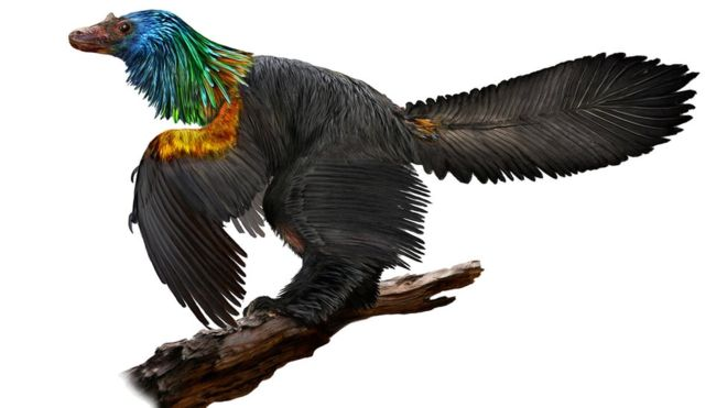 A new rainbow coloured dinosaur fossil has been discovered