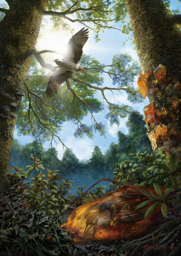 An illustration shows the young Cretaceous bird trapped in tree resin, which would eventually fossilize into amber. Illustration by Cheung Chung Tat