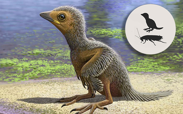 LANDLOCKED A baby Enantiornithes, which might have looked like this artist's illustration, was born about 127 million years ago. The hatchling would have been less than 5 centimeters in length, roughly the size of a large cockroach.