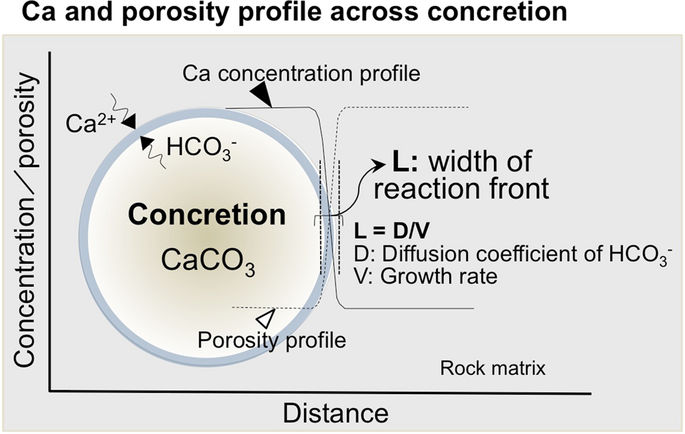 Conceptual view of the features of spherical concretions. Ca profile and porosity distribution across the spherical concretion forming under rather stable conditions under which solutes diffused continuously, causing calcite precipitation until the organic source of carbon at the centre of the concretion was consumed.