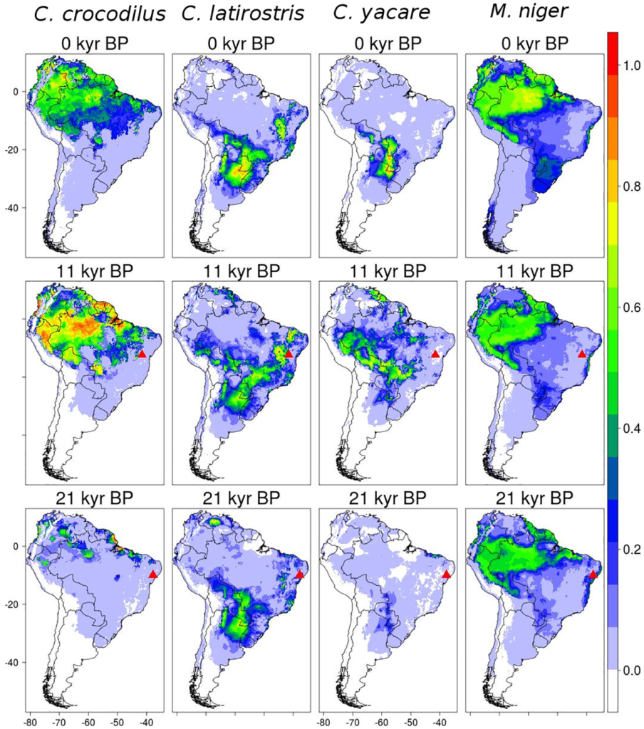 Results of Maxent algorithm for the caiman species (C. c. crocodilus, C. yacare, C. latirostsris, and M. niger). The suitability projections for current time are showed in continuous scale (between 0 and 1). Triangles represent the coordinates of fossil records